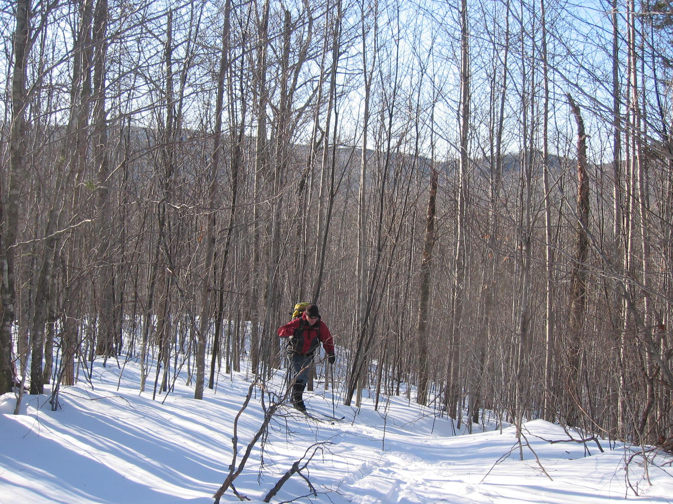 Skier in woods