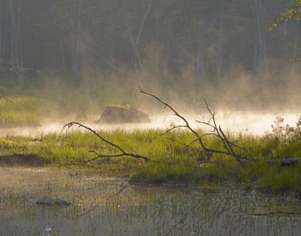 Photo of Demeritt Marsh by Pam Wells