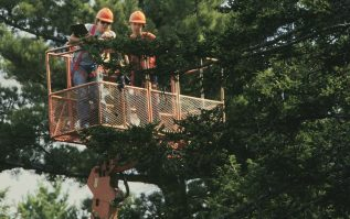 photo of workers on lift looking at tree